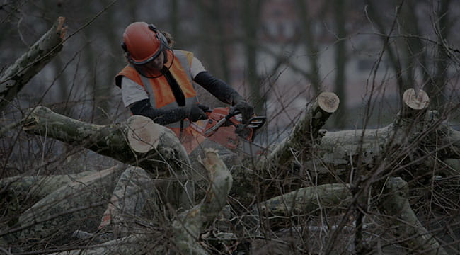 Odenton Tree Service