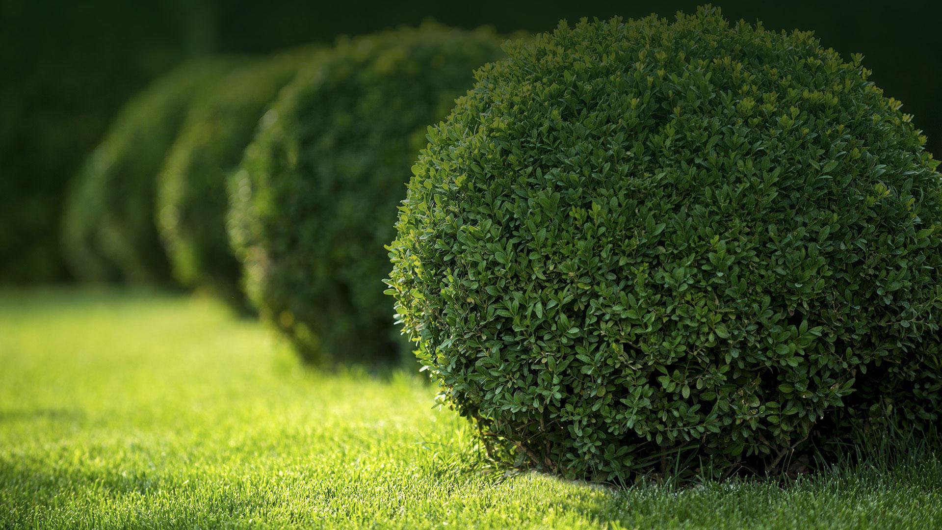 EW Lawn Care Service LLC Lawn Maintenance, Garden Design and Fertilization slide 1